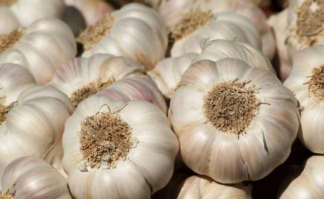 garlic-en