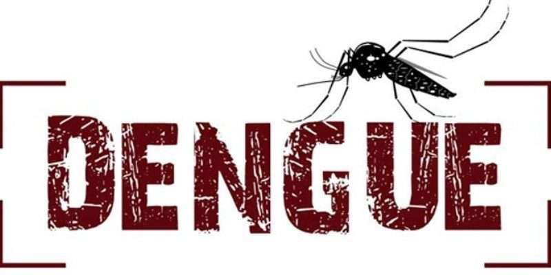 denguee