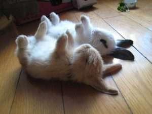 rabbit en2