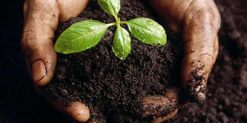 fertilizer en