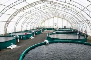 9062009_web1_fish-farm-letter-PM