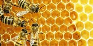 BEES_800x400