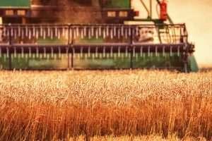 WheatHarvestCloseup_Lead