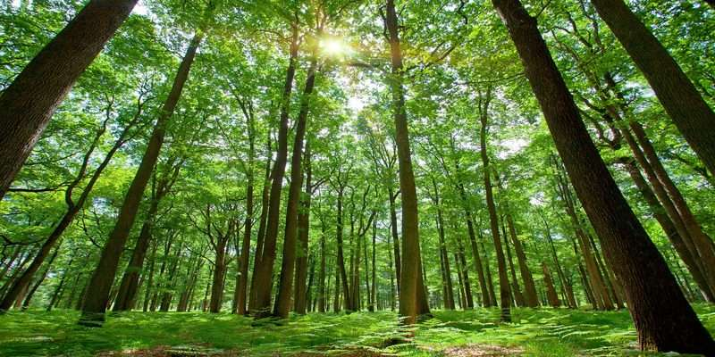 France --- Forest with Sun Behind --- Image by © Ocean/Corbis