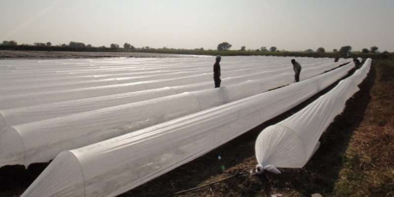 Ethics-vegetable-crops-grawing-in-low-tunnel-polyhouse-in-surat-gujarat-maharashtra-madhya-pradesh-rajasthan-andhara-pradesh-telegana-india-74130265201688_800x400