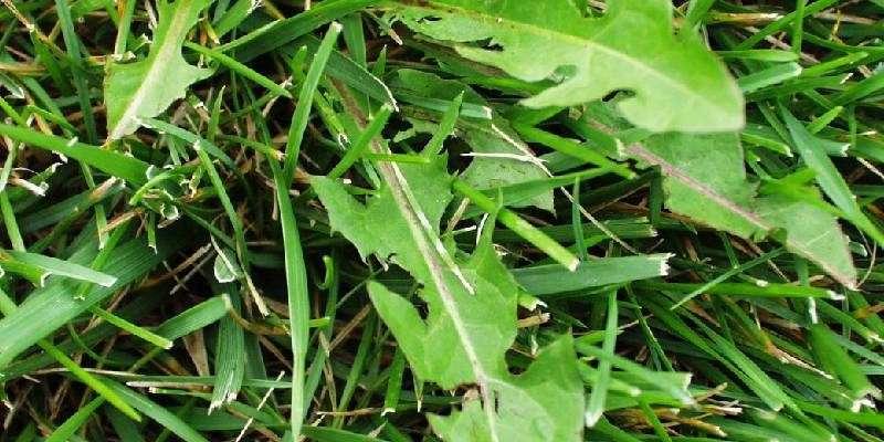weed in crop