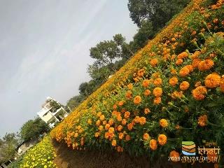 Dhaval nursery