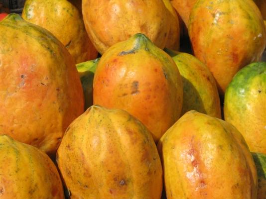 Papaya | Papaya Fruit in Punjab | Apni Kheti