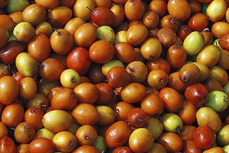 ber information ber farming in punjab
