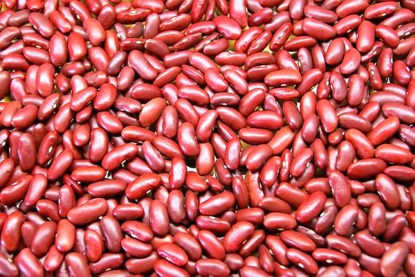 Kidney Bean Farming Guide Punjab Apni Kheti