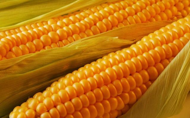 Maize Kharif   Kharif Maize Crop information