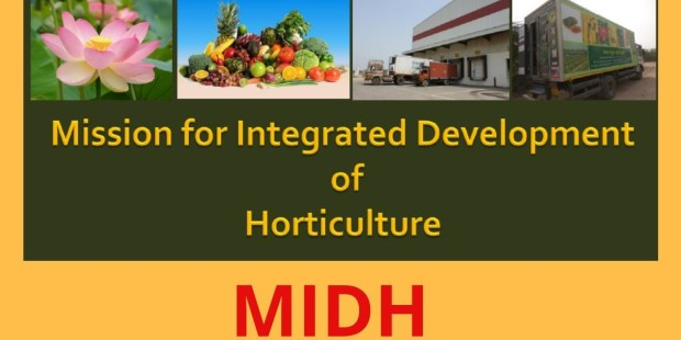 Government Scheme: Integrated Development of Horticulture (MIDH) | Govt. Agricultural Schemes